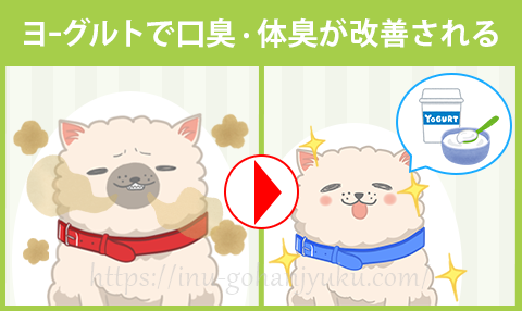 【効果3】ヨーグルトで愛犬の口臭・体臭を改善!