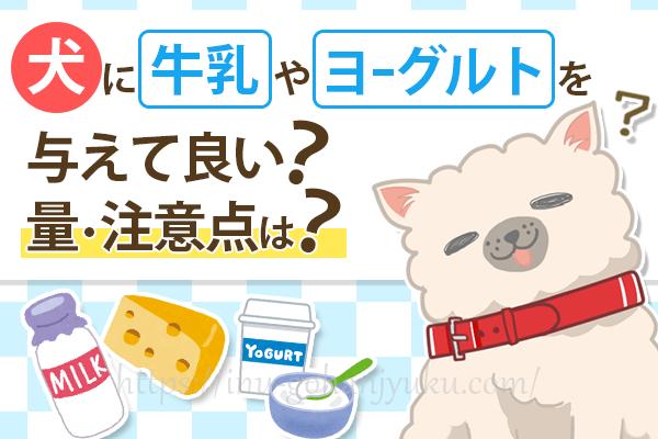 犬に牛乳・ヨーグルト・チーズを与えて良い?量や注意点、健康効果は?