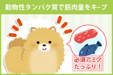 【ポイント1】肉・魚のドッグフードで体を丈夫に!