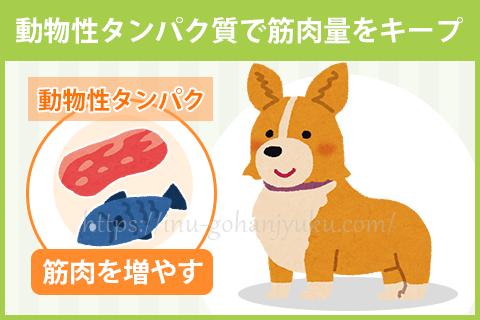 【ポイント1】肉・魚メインのフードで筋肉をつける!