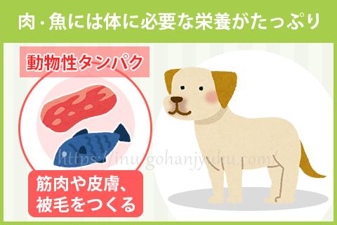 【ポイント1】動物性タンパク質は消化がよく・栄養満点!